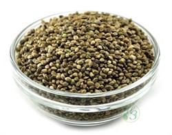Семена конопли неочищенные 500г - фото 7429