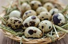 О пользе перепелиных яиц и их скорлупы