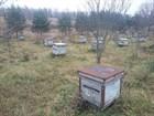 В гостях у Тверского пчеловода