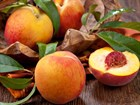 Ждём поставку фруктов и овощей с эко-фермы