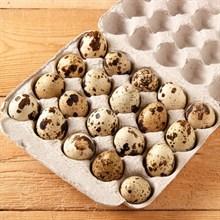 Яйцо перепелиное фермерское  Александровская слобода 20шт ❄️ - фото 12847