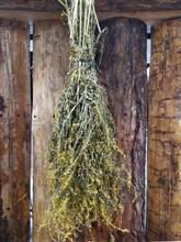 Травяной веник Донник - фото 12875
