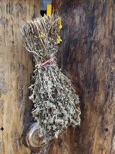 Травяной веник Чабрец - фото 12877