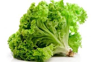 Салат зелёный БИО 1кг - фото 9512